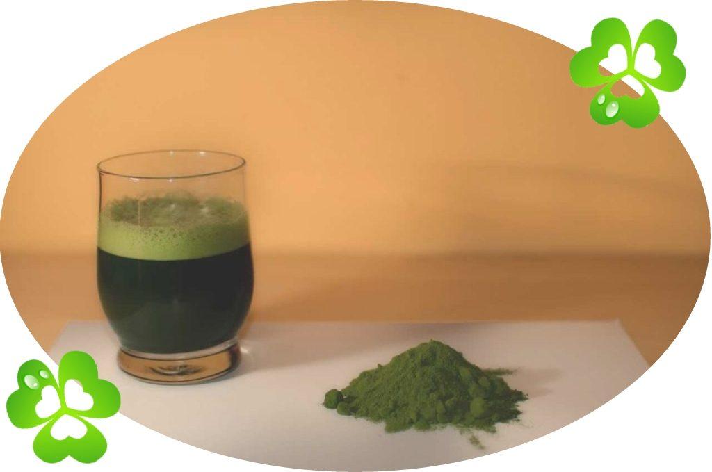 Zelený ječmen - Zelená Oáza